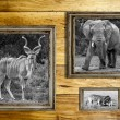 Three wooden frames with wild animals. — Stock Photo #59493741
