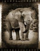 Abstract African elephant. — Stok fotoğraf