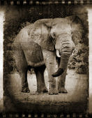 Abstract African elephant. — Stock Photo