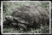 Abstract leopard tortoise. — Stock Photo