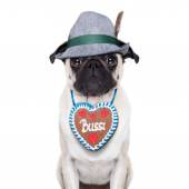Bavarian pug dog — Stock Photo