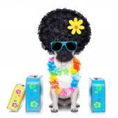 Diva dog vacation — Stock Photo
