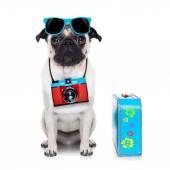 Dog photographer — Stock Photo