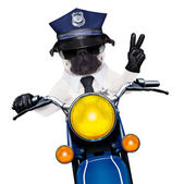 Police dog motorbike — Stock Photo