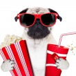 Movie dog — Stock Photo #52726269