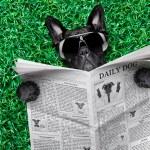 Cool dog newspaper — Stock Photo #53226229