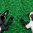 Couple of dogs — Stock Photo #53226317