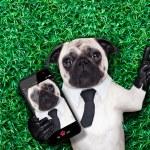 Selfie pug dog — Stock Photo #53227159