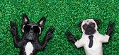 Para psów — Zdjęcie stockowe