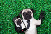 Selfie pug dog — Stock Photo