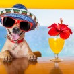 Cocktail dog — Stock Photo #54662433