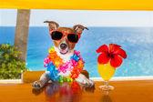 Cocktail dog — Foto de Stock