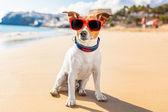 Verano de perro — Foto de Stock