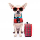 Dog on holidays — Stock Photo