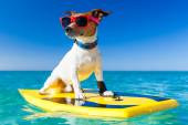 Perro surfista — Foto de Stock