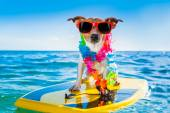Surfing dog  — Stock Photo