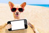 Chihuahua dog selfie — Foto Stock