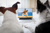 Dogs watching a movie  — Stock Photo