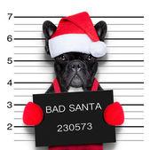 Christmas mugshot — Stock Photo