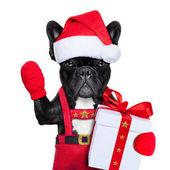 Santa dog — Photo