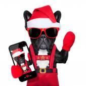 Santa selfie dog — Stockfoto