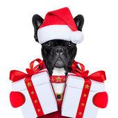 Santa pes — Stock fotografie