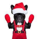 Santa selfie dog — Photo
