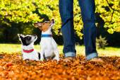 Dogs and owner — Stock Photo