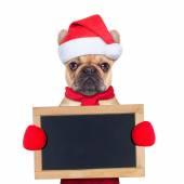 Weihnachten Hund — Stockfoto