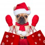 Christmas dog shopping — Stock Photo #56546937