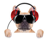 Dj disco dog — Stock Photo