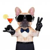Cool party dog — Stock Photo