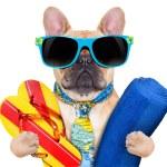 Cool beach dog — Stock Photo #57580197