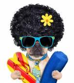 Cool beach dog — Stock Photo