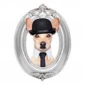 Dog in a frame — Zdjęcie stockowe
