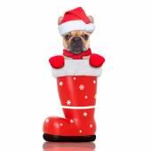 Boże narodzenie pies w pewien czerwony zyski santa — Zdjęcie stockowe
