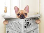 Dog toilet — Stock Photo