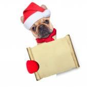 Christmas dog  — Stock Photo