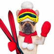 Dog ski winter — Stock Photo #60194539