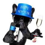 Happy new year dog — Stock Photo #60548965
