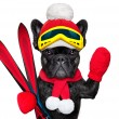 Dog ski winter — Stock Photo #60549949