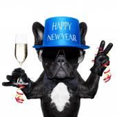 Happy new year dog — Stock Photo