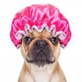 Shower dog — Stok fotoğraf
