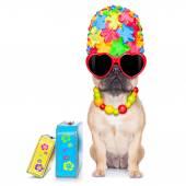 Fawn french bulldog — Stock Photo