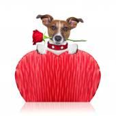 Валентина собак — Стоковое фото