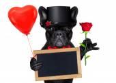 バレンタイン新郎犬 — ストック写真