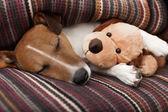 Dog sleeping — Stock Photo