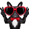 Happy cool dog  — Stock Photo #66059463
