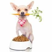 Healthy hungry dog — Stock Photo