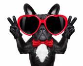 Happy cool dog  — Stok fotoğraf